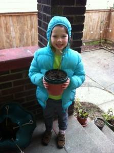 Avocado Plant (Alive)